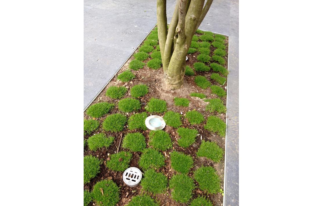 architectuur tuin integreren boom